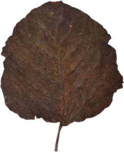 Indian Rustica Leaves C Sc 1