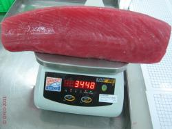 Photo-pangasius--96ede18295a1258ffbe1dca74eed34d0