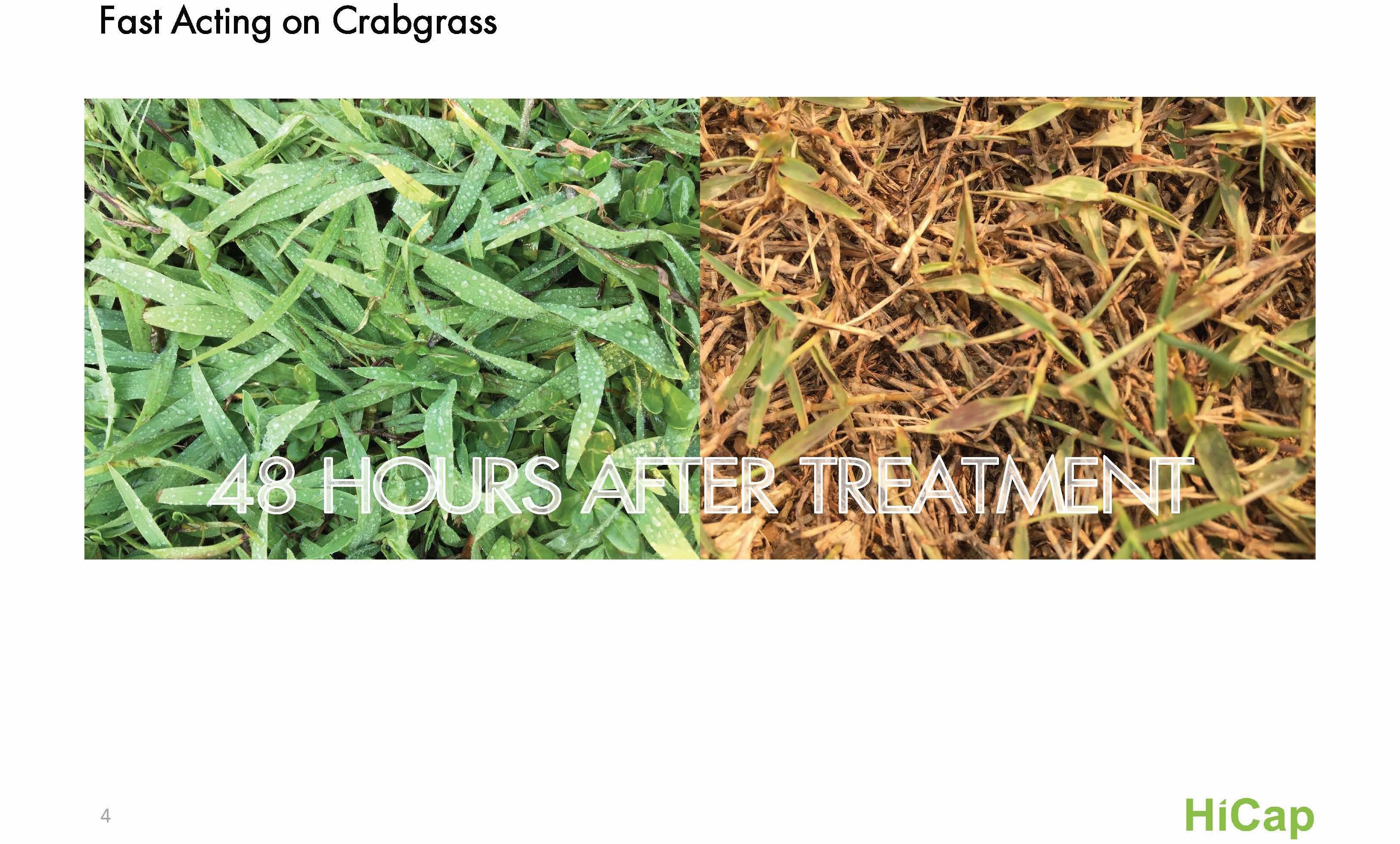 Raute Post Emergent Crabgrass Control Herbicide Biocides1 Com